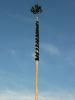 Kirta Loifling 2012_3